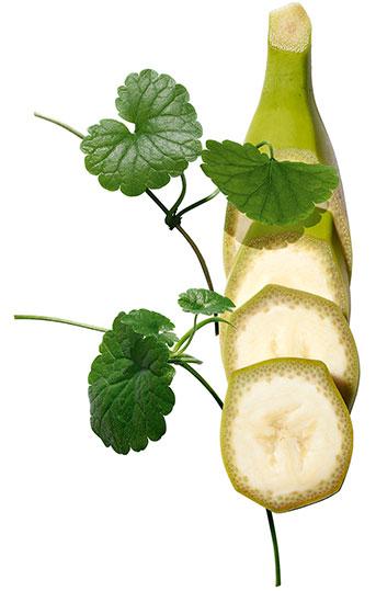그린 바나나 추출물과 시카(센텔라 아시아티카)