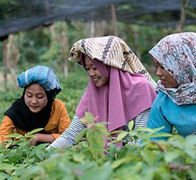 논에서 일하는 여성의 사진